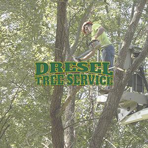 tree service website design edwardsville il