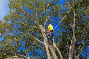 Tree Service Companies